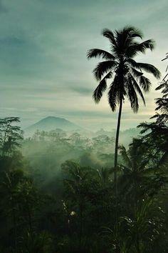 The natural beauty of Bali.