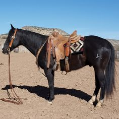 Fancy Cow Horse Gelding for Sale - For more information click on the image or see ad # 44437 on www.RanchWorldAds.com