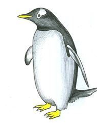 how to draw a baby emperor penguin step by step