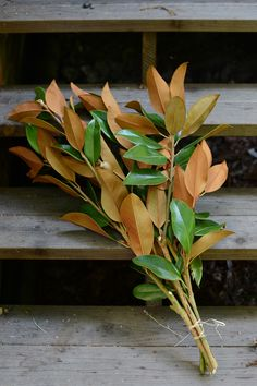 You can buy fresh magnolia branches and have them shipped to you right from the farm located in Central California!
