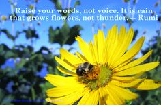 Raise your words, not voice. It is rain that grows #flowers, not thunder. -Rumi (Photo: @JuneStoyer)