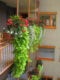 Balcony Flower Box, Outdoor Flower Planters, Potted Plants Patio, Outside Plants, Outdoor Flowers, Hanging Plants, Window Box Plants, Front Door Plants, Window Box Flowers