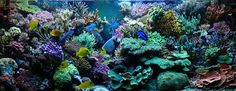Gloupe's reef is a French chef-d'oeuvre, a modern coral masterpiece Marine Aquarium, Reef Aquarium, Saltwater Aquarium, Glass Houses, Aquariums, Coral, French, Modern, Plants