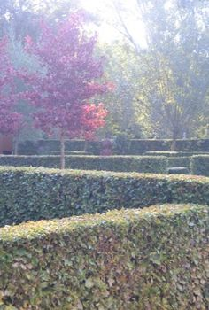 The beauty of stong lines in the garden by In Tempo Garden Design, Gardens, Plants, Beauty, Landscape Designs, Plant, Tuin, Yard Design, House Gardens