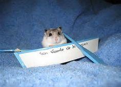 Image result for summer time hamster
