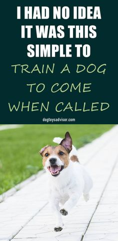 Training your dog to come when called is an essential basic command for dogs. Find out the fastest way to get your dog to come when called ANYWHERE and EVERY TIME, without stressing out too much. Dog Training Techniques, Dog Training Videos, Training Your Dog, Brain Training, Pet Care Tips, Dog Care, Excited Dog, Deaf Dog, Dog Whistle