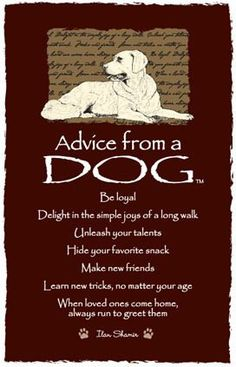 Spirit animal totem advice from a dog. Animal Spirit Guides, Spirit Animal, Advice Quotes, Dog Quotes, Advice Cards, Wall Quotes, I Love Dogs, Puppy Love, Life Quotes Love