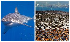 Photojournalist and environmental activist Paul Hilton has recently turned a spotlight to the impending problem of shark extinction � and two of his pictures, in particular, should give us a lot of food for thought.