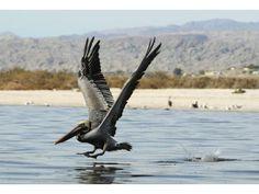Salton Sea struggles to survive Yosemite National Park, National Parks, Salton Sea, Riverside County, Coachella Valley, Lake Water, Bald Eagle, Survival, Places