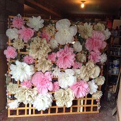 Paper pom pom flowers weddings decorations flower wall backdrop birthday pink choose colours available Pom Pom Flowers, Tissue Paper Flowers, Flower Wall Backdrop, Wall Backdrops, Paper Flower Decor, Paper Flowers Wedding, Paper Sunflowers, Flower Model, Paper Pom Poms