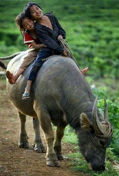 Kinder auf Wasserbüffel
