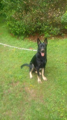 Harwinton Animal Control added 2 new photos. ATTENTION!! MISSING DOG.  This is Makwa, he has been missing from Marsh Rd in Northfield CT since 5:30 a.m. Saturday. If you see this dog please call Harwinton Animal Control at 860-806-8743. Thank you, please share. https://www.facebook.com/groups/330978610254210/permalink/1025532997465431/