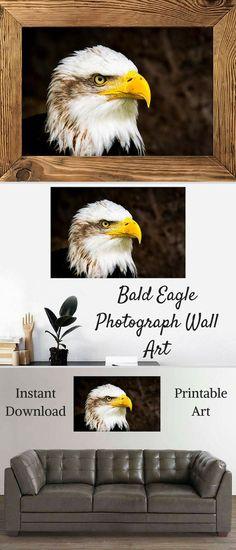 Bald Eagle Photograph Wall Art, Bald Eagle Print, United States, National Symbol, Eagle, Wildlife Decor, Bird, Instant Download Printable