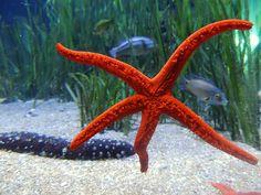 Starfish, Water, Sea, Underwater