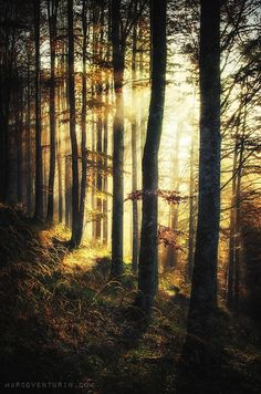 When the forest is vibrant by Marco Venturin on 500px