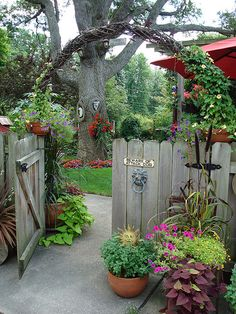 Pretty trellis arching over the gate.