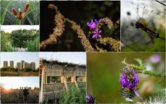 Tura in Parcul National Vacaresti, Delta Vacaresti, Parcuri din Bucuresti, Traseu in Delta Vacaresti, Lacul Vacaresti
