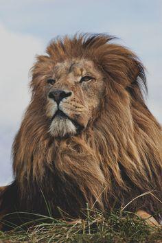 León Celestial