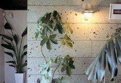 「大谷石 インテリア」の画像検索結果 Plants, Design, Plant, Planets