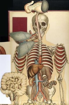 Body of Knowledge: Design Observer Medical Illustration, Nature Illustration, Anatomy Art, Human Anatomy, Science Models, Design Observer, Gross Anatomy, Self Exploration, Danse Macabre