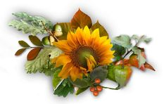 Tvoření Fall Decor, Blog, Autumn, Plants, Fall, Blogging, Plant, Planting, Planets