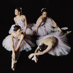 Ballet ballerinas