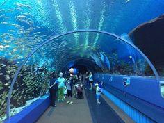 Georgia Aquarium - Largest Aquarium in the World! Georgia Aquarium, Wonderful Places, Great Places, Amazing Aquariums, Sea To Shining Sea, Underwater Creatures, Greatest Adventure, Best Vacations, Great View