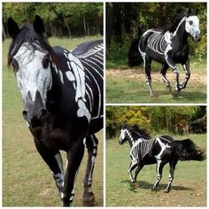 Now All You Need is a Headless Horseman!