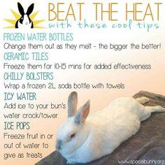 Keeping bunnies cool