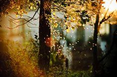 Magical Tree, Lithuania via bluepueblo