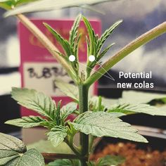 Weed, Grow Supplies, Perfect Joint, Permaculture, Bonsai, Blog, Planters, Flowers, Gardens