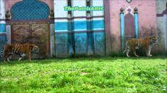 Bengal Express Bellewaerde