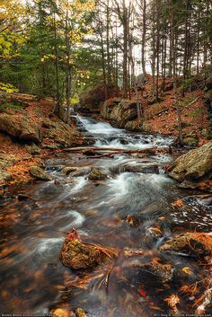 Bubble Brook, Acadia National Park, Maine.