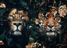 Illustrations Discover wild lion and tiger poster Animals Poster Print Iphone Wallpaper Cat, Animal Wallpaper, Wallpaper Backgrounds, Animals And Pets, Cute Animals, Tiger Poster, Wild Lion, Wild Creatures, Animal Posters