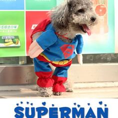 Superpet outfit-A superpet arrives to complete one mission, making sure everyone enjoy Halloween~