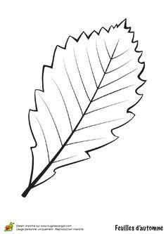 Coloriage / dessin feuilles automne bouleau