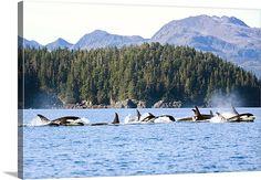 Knight Island alaska - Google Search