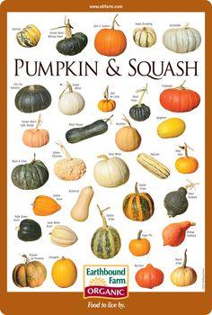 Squash & pumpkin varieties