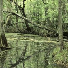 The property's roads and trails meander through pine flatwoods, consisting of both slash and longleaf pine overstory, palmetto/gallberry understory and hydric hammock and floodplain swamp along the river. Closer To Nature, Florida Travel, Photo Location, Get Outside, Ponds, Preserve, Habitats, Hammock, Fun Stuff