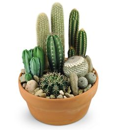 Cactus Garden Spike Attack!!!