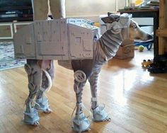 Anything Star Wars! Because Star Wars is the best! Best Dog Costumes, Best Costume Ever, Pet Costumes, Creative Halloween Costumes, Cool Costumes, Animal Costumes, Happy Halloween, Halloween Outfits, Costume Ideas