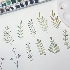 Botanical practice