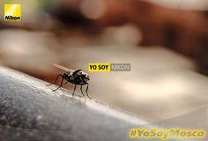 Fabian David Silva #YoSoyNikon #YoSoyMosca Nikon D5100