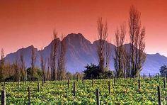 Beautiful winelands South Africa, Tourism, Window, African, Beautiful, Turismo, Windows, Travel, Traveling
