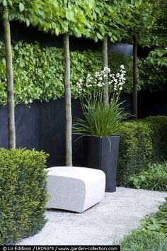 Creative way to have privacy with trees.