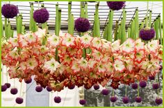 RHS Chelsea Flower Show |  Allium and amaryllis of many colors and kinds, potted and hanging from above. I wonder if they have to replace the hanging cut flowers everyday? To read more: http://floatingpetals.net/the-rhs-chelsea-flower-show-part-ii/