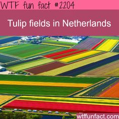 An aerial view of colourful tulip fields in Lisse, The Netherlands. Today Holland produces more than nine billion bulbs every year, with two-thirds of tulips exported across the world. Places To Travel, Places To See, Places Around The World, Around The Worlds, Bavaro Beach, Dutch Tulip, Tulip Fields, Thinking Day, Wtf Fun Facts