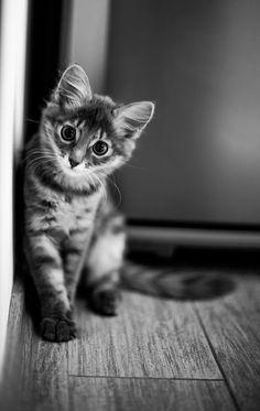 cat - sweet baby