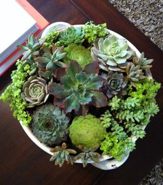 how to: indoor succulent garden | love, the looking glass...