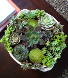 how to: indoor succulent garden   love, the looking glass...